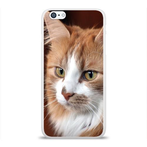 Чехол для Apple iPhone 6Plus/6SPlus силиконовый глянцевый  Фото 01, Кот