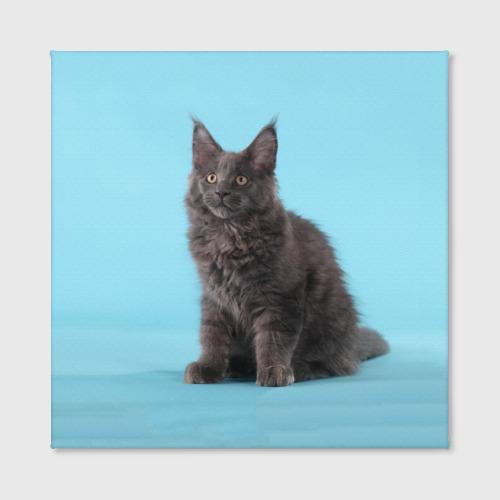 Холст квадратный  Фото 02, Кот мейн кун