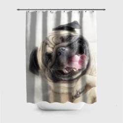 Смешная собачка
