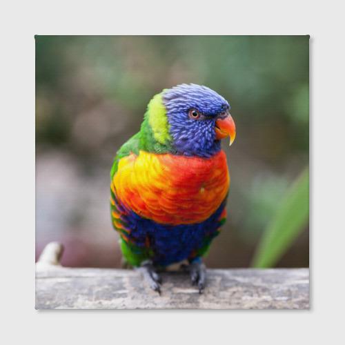 Холст квадратный  Фото 02, Попугай