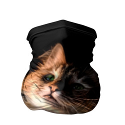 Зеленоглазый котёнок