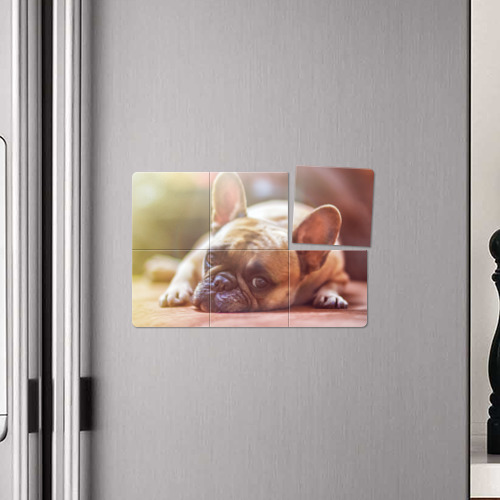 Магнитный плакат 3Х2  Фото 04, французский бульдог