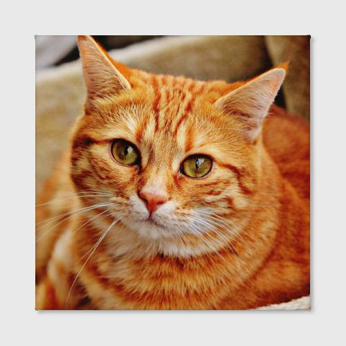 Холст квадратный  Фото 02, кот