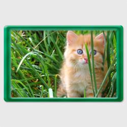Рыжий голубоглазый котёнок