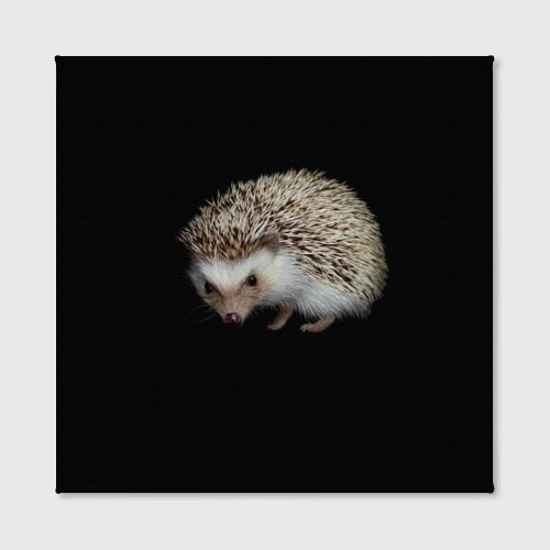 Холст квадратный  Фото 02, Ежик 2