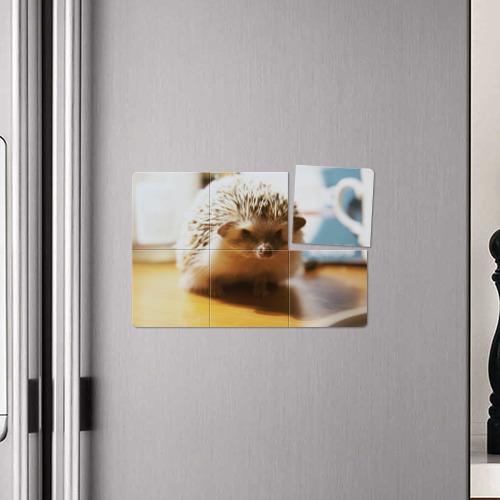 Магнитный плакат 3Х2  Фото 04, Ежик 4