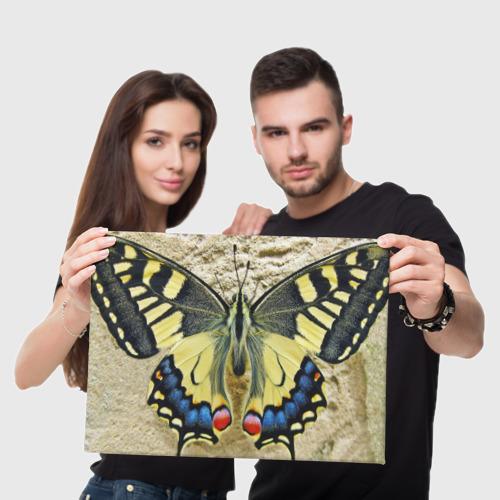 Холст прямоугольный  Фото 05, бабочка