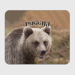 Медведь Россия