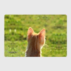 Котенок спина