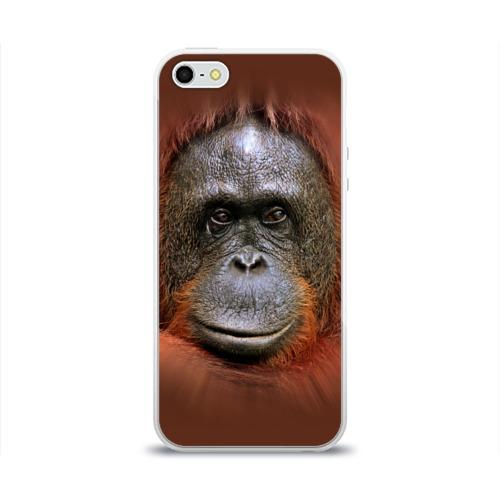 Чехол для Apple iPhone 5/5S силиконовый глянцевый Обезьяна Фото 01