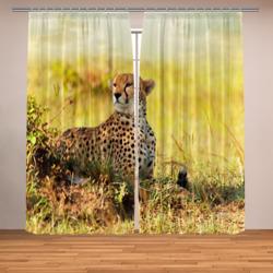 Гепард в саване