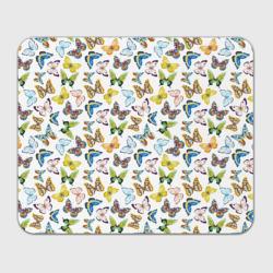 Цветы и бабочки 11