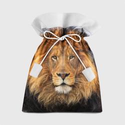 Красавец лев