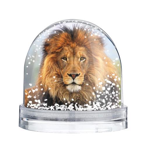 Водяной шар со снегом  Фото 02, Красавец лев