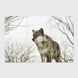 Волк во весь рост