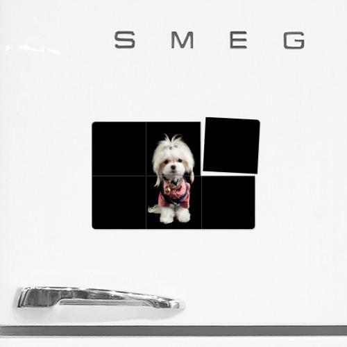Магнитный плакат 3Х2  Фото 02, Хиппи пес