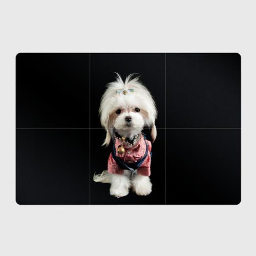 Магнитный плакат 3Х2  Фото 01, Хиппи пес