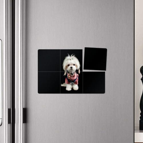 Магнитный плакат 3Х2  Фото 04, Хиппи пес