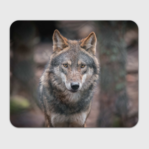 Коврик прямоугольный  Фото 01, Wolf
