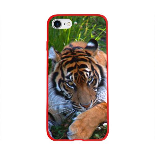Скромный тигр