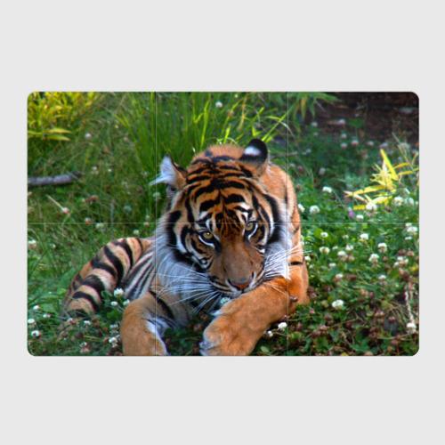 Магнитный плакат 3Х2  Фото 01, Скромный тигр