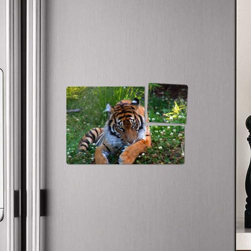 Магнитный плакат 3Х2 Скромный тигр Фото 01