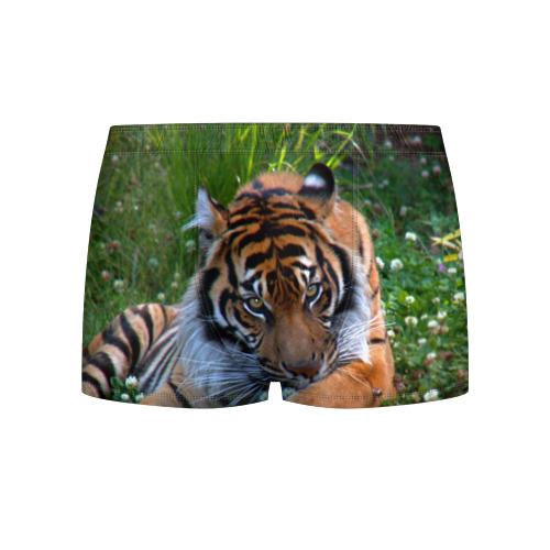 Мужские трусы 3D  Фото 01, Скромный тигр