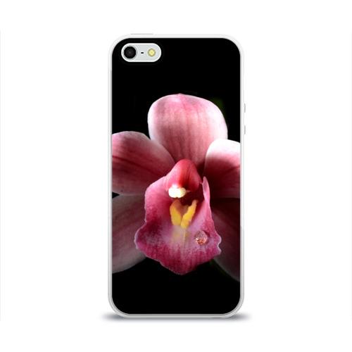 Чехол для Apple iPhone 5/5S силиконовый глянцевый  Фото 01, Орхидея