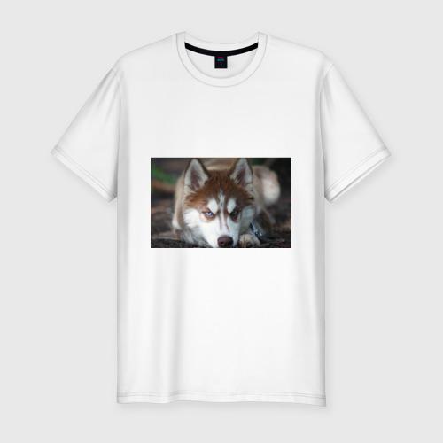 Мужская футболка премиум  Фото 01, Хаски