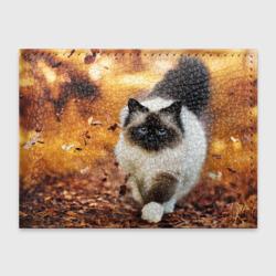 Котик в листьях