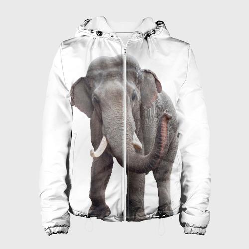 Слон VPPDGryphon