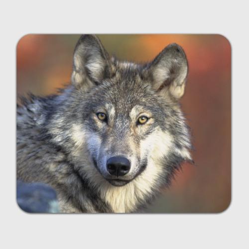 Коврик для мышки прямоугольный  Фото 01, Волк
