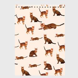 Котейки дольче 2