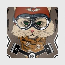 Кот-гонщик