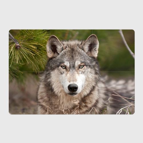 Магнитный плакат 3Х2  Фото 01, Волк