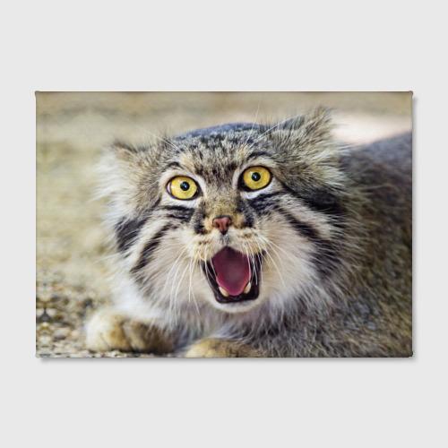 Холст прямоугольный Дикий кот Фото 01
