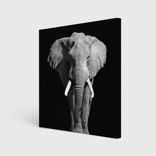 Холст квадратный  Фото 01, Слон