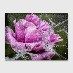 Душа цветов