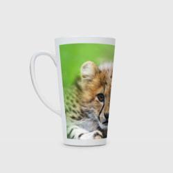 Котёнок гепарда