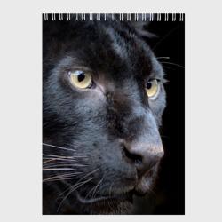 Черная пантера