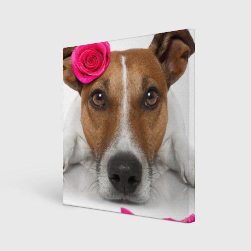 Холст квадратный  Фото 01, Джек рассел с розой