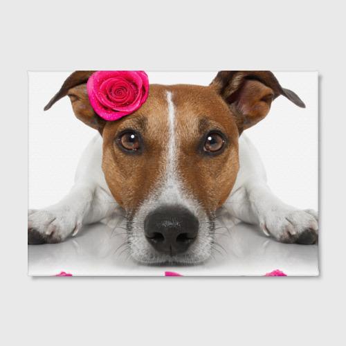 Холст прямоугольный  Фото 02, Джек рассел с розой