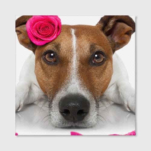 Холст квадратный  Фото 02, Джек рассел с розой