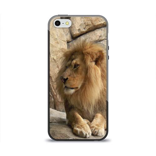 Чехол для iPhone 5/5S глянцевый Лев Фото 01