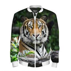 Тигр в джунглях