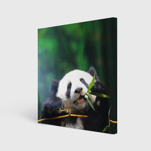 Холст квадратный  Фото 01, Панда на ветке