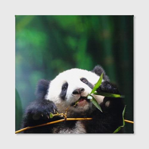 Холст квадратный  Фото 02, Панда на ветке