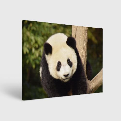 Холст прямоугольный  Фото 01, Панда на дереве