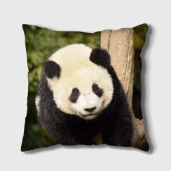 Панда на дереве
