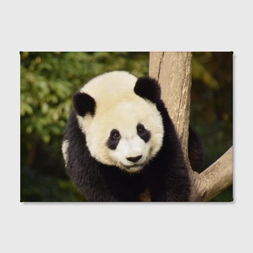 Холст прямоугольный  Фото 02, Панда на дереве